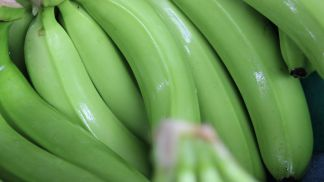 Top banana growers to adopt ethylene scavenging technology